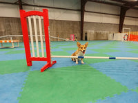 400 - Introduction to Agility - Instructors: Ace Russell, Susie Stout