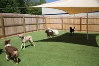 DAYCARE: TOP DOG Monthly Membership Package