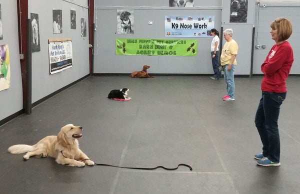 TBD - Intermediate Obedience Class
