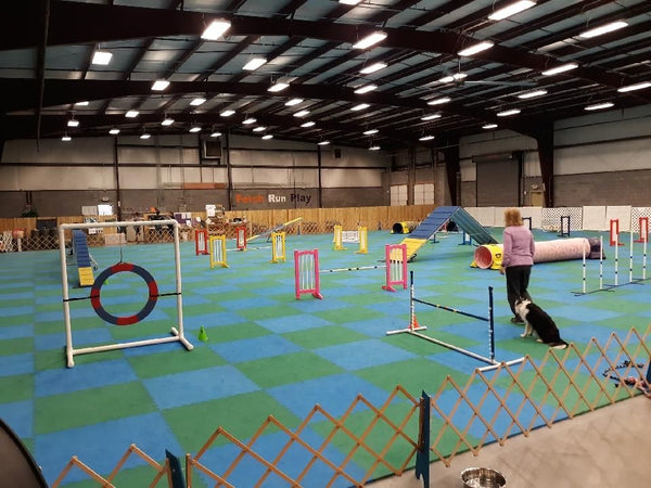ONGOING - Agility Party - Managers: Susie Stout, Ace Russell