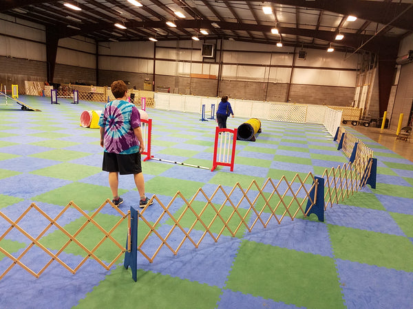 411 - Beginner Agility Level 1 Drop-Ins - Instructor: Barb Knowlton