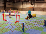 410 - Intro to Agility - Instructor: Barb Knowlton