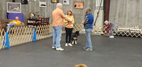 201a - Beginner Obedience 3 sessions