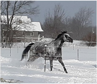 "Lola the Retired Racehorse, Chapter 4 ""SNOW!!"""