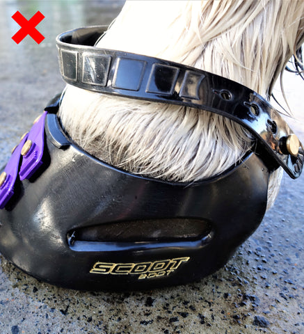 Pastern Strap Too Lose