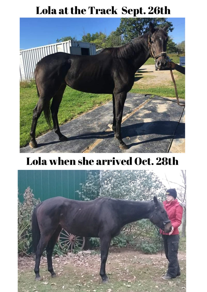 Lola the Retired Racehorse, Chapter 1