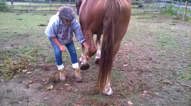 How to Make Hoofcare as Easy as ... Feeding a Carrot!