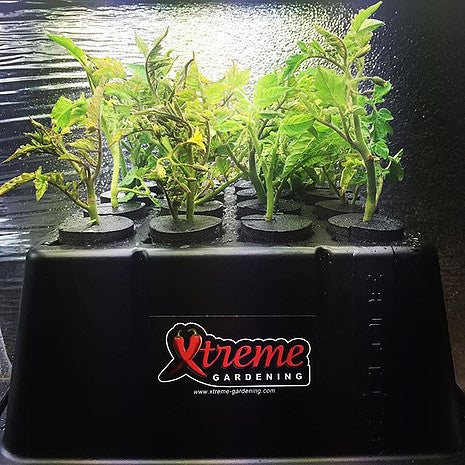 What is the Best Way to Clone?