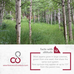 #factswithaltitude aspen trees