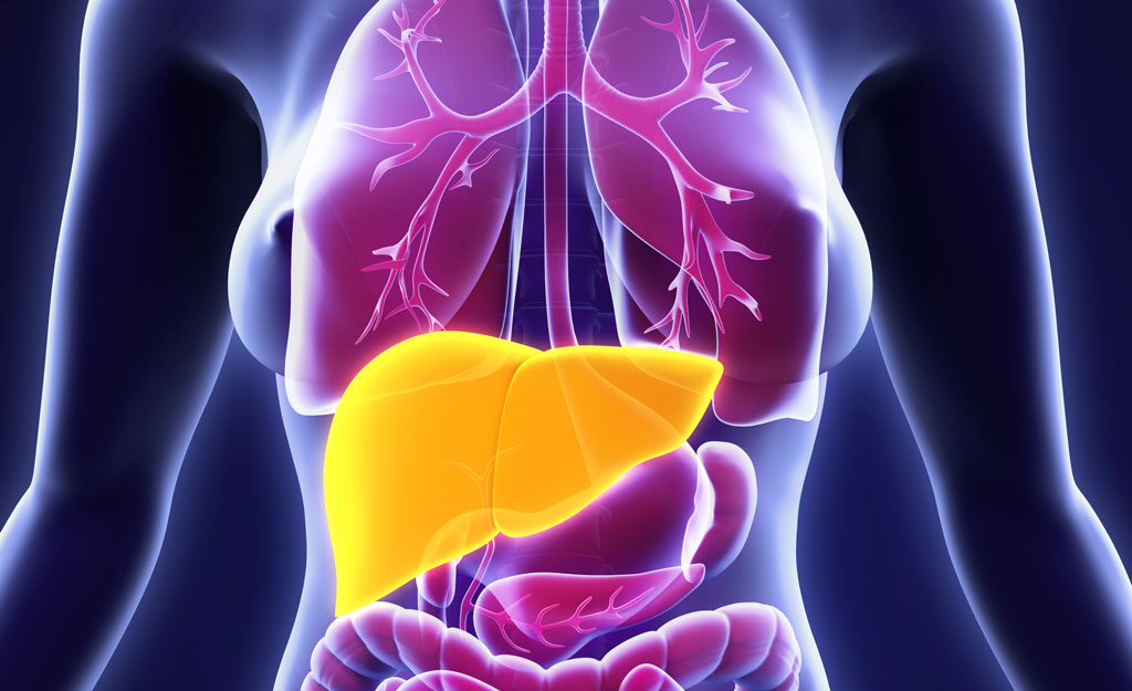 Liver Health and how it impacts your hormones