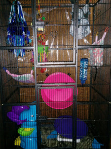 What Cage Should I Get for my Sugar Glider??