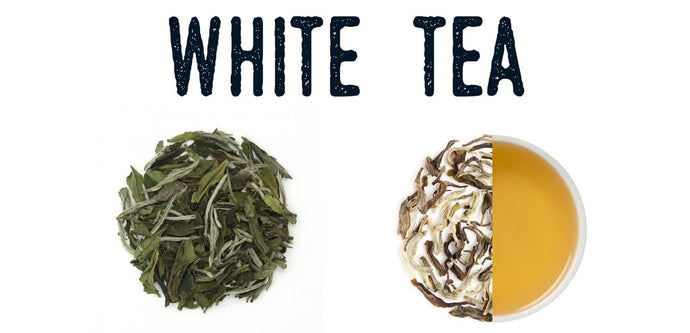 What is White Tea? Everything you need to know about this delicate, extremely refreshing tea.