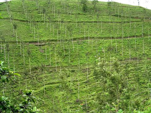 Tea Plantation India Terroir