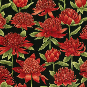 Waratah - by Nutex