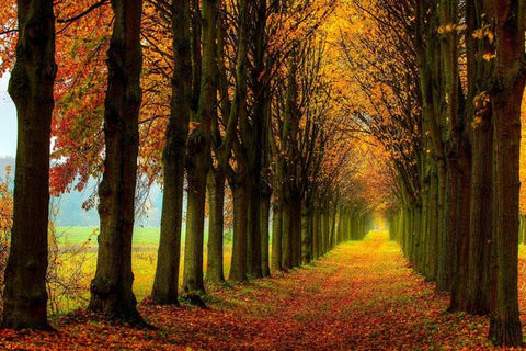 Autumn Season Fallen Leaves Forest Path Trees Landscape Art Silk Poster Room Wall Decor Picture inch 09 - 13x20 inch (33x50cm)