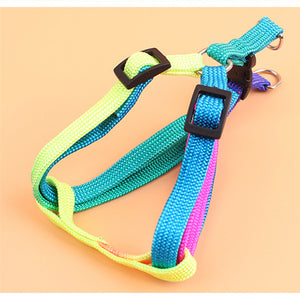 Multicolour Harness and Lead
