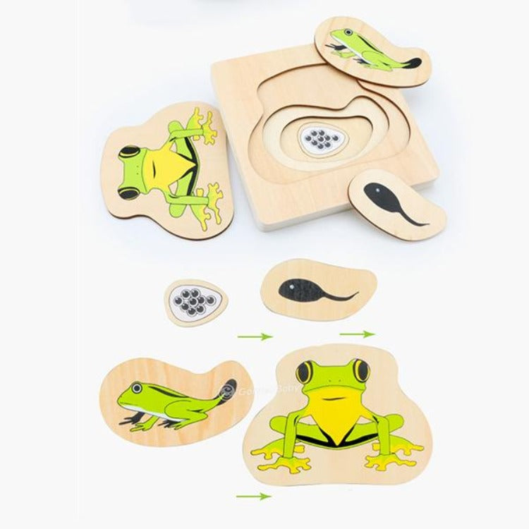 Wooden Frog Growth Layered Puzzle - iKids