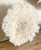 Authentic Coral - Mounted Plate Coral