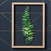 Boston Fern - A3