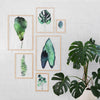 Botanic Series - The Complete 6-Piece Set