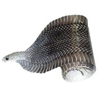 Exotic Full Cobra Snake Skin With Head