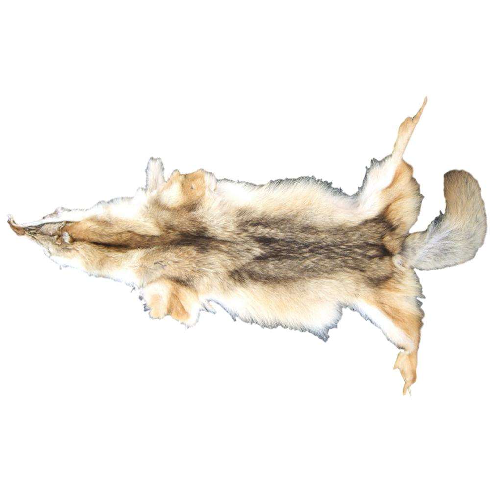 High Quality Carefully Tanned Coyote Hide - Full Body Fur Pelt