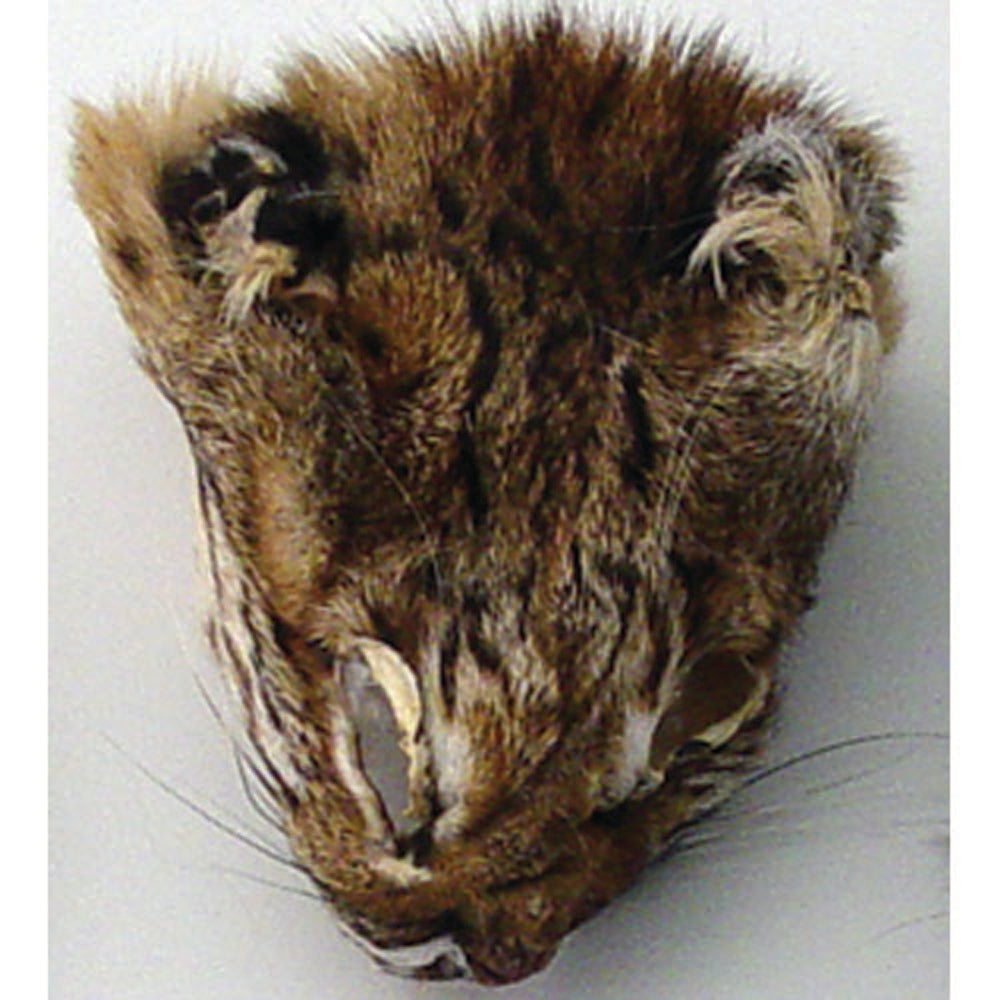 Authentic Lynx Face - Genuine Fur Animal Face for Crafts and Costumes
