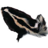 Authentic Skunk Skin - Pelt - Fur - Hide