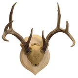 Deluxe Antler Display Kit - Make Your Own Hanging Wall Antler Stand - Cherry, Walnut, Pine Wood