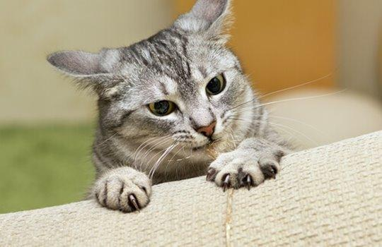 Banning Cats Declaw Surgeries