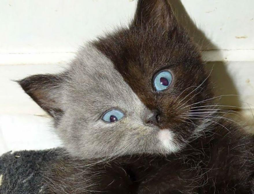 'Two Faces' Kitten Turns Into The Most Beautiful Cat Ever