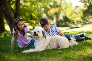 Helpful Tips to Know About Dogs with Children