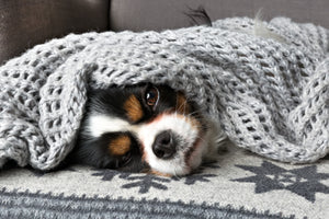 Scaredy Dogs: How to Help Your Dog Overcome Anxiety