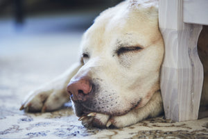 Understanding Your Dogs Sleep Habits