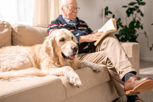 10 Ways to Add More Healthy Years to Your Old Dogs Life