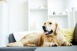 How to Maintain a Pet Friendly Clean Home