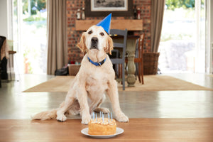 5 Fun Ways to Celebrate Your Dog's Birthday