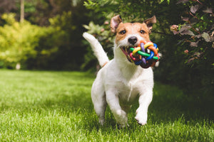 Importance of Probiotics for Your Dog's Health
