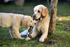 Best Ways to Socialize Your Dog
