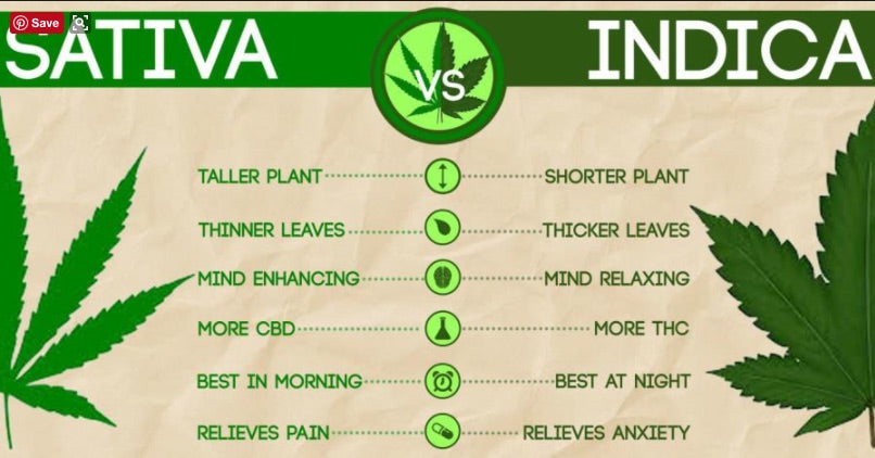 The Difference Between Indica and Sativa - And the Benefits of Both.
