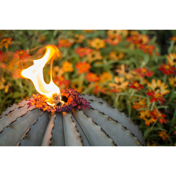 Golden Barrel Cactus with Torch