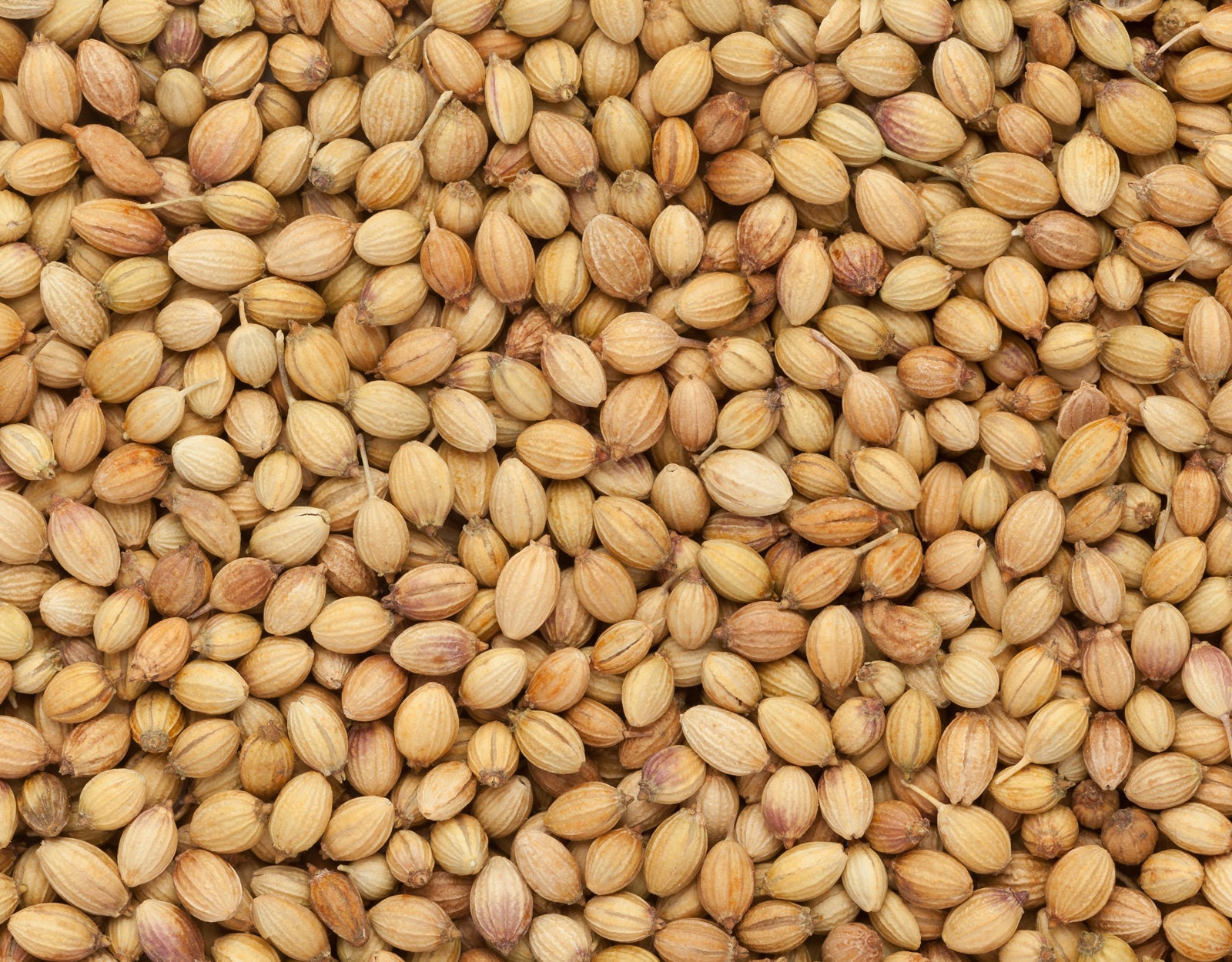 What Is Coriander And How Is It Used? - The Spruce Eats Can Be Fun For Anyone