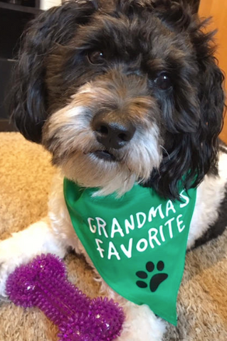 Grandma's Favorite Over the Collar Pet Bandana