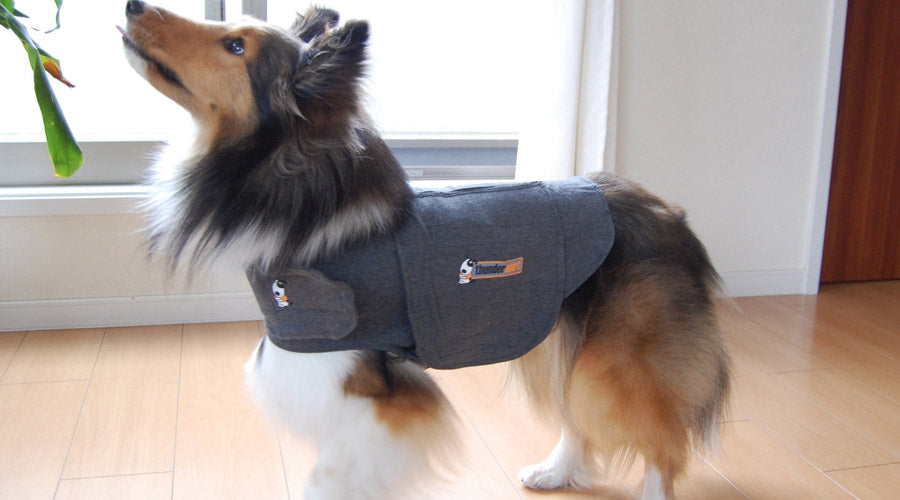Top 5 Best Anxiety Vests For Dogs You Need To Know