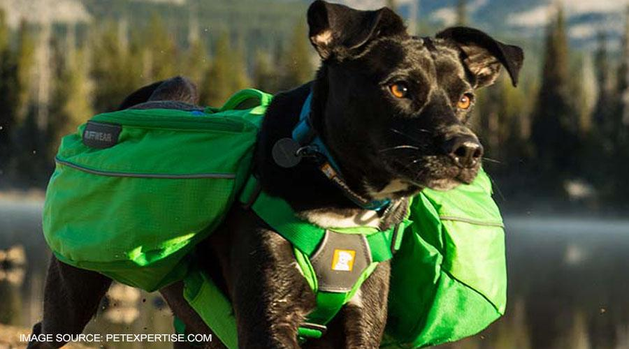 The Top 5 Best Hiking Backpacks for Dogs
