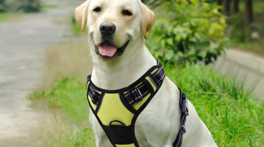 Top 5 Dog Harnesses of 2018 - Product Reviews