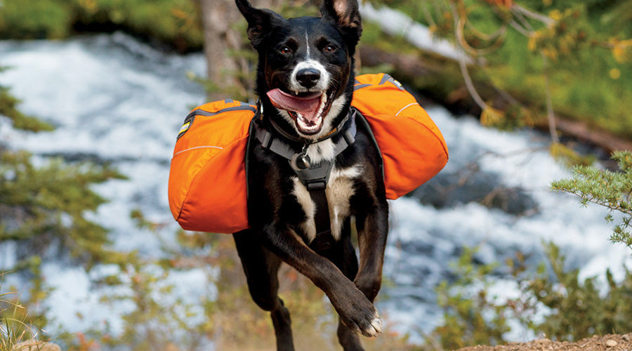 Ruffwear Back Pack Review