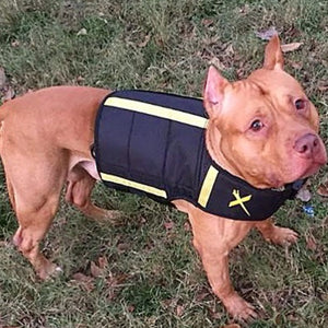 weight vest for pitbulls and american bullys