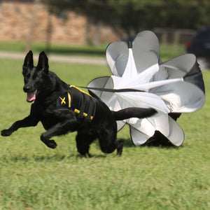 Running parachute for dogs, great for adding resistance and training for canines.