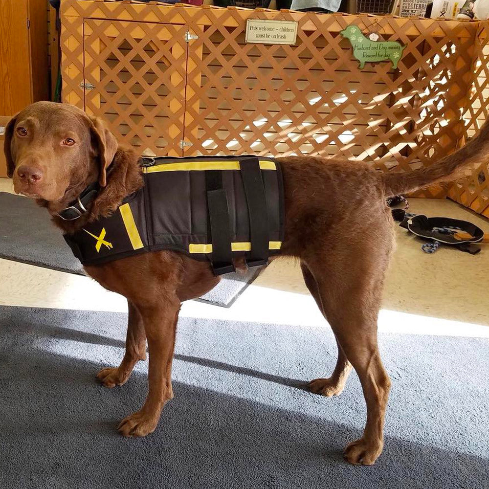 Xdog weight fitness xdog weight fitness vest nvjuhfo Image collections